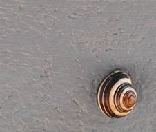 Snail On A Gray Cement Wall. Stock Images