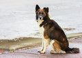 Free Portrait Of A Stray Dog In Street. Stock Images - 30851954