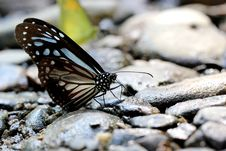 Free Butterfly Royalty Free Stock Photos - 30856988