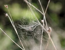 Free Spider Web In Nature Royalty Free Stock Photos - 30858448