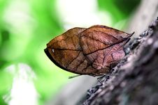 Free Butterfly Stock Image - 30859691