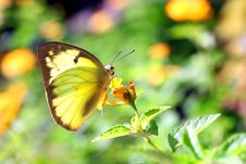 Free Butterfly Royalty Free Stock Images - 30859759