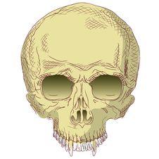 The Human Skull. Stock Photography