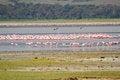 Free Flamingos Royalty Free Stock Photos - 30877258