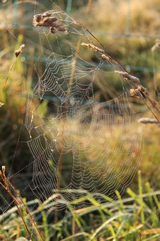Free Spiders Web. Royalty Free Stock Photography - 30879547
