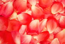 Free Rose Petals Background Royalty Free Stock Image - 30884116