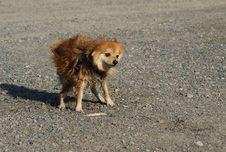 Free Wet Dog Shaking Stock Images - 30884524