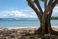 Free Tree At Beach Stock Photos - 30886323
