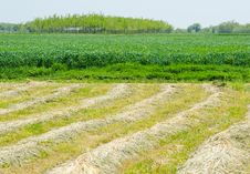 Free Agricultural Fields Stock Images - 30887354