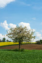 Free Blooming Tree Stock Photos - 30899763