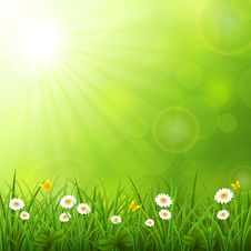 Free Summer Background With Grass Royalty Free Stock Photography - 30891187