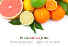 Free Citrus Fruits Royalty Free Stock Images - 30891539