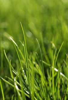 Free Green Grass Close-up Growth Concept Stock Photo - 30892820
