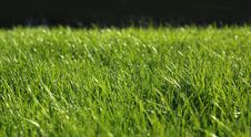Free Green Grass Close-up Growth Concept Stock Images - 30892844