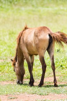 Brown Horse Feeding Stock Image