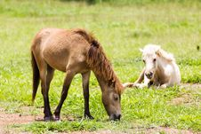 Free Brown Horse Feeding Royalty Free Stock Photos - 30897448