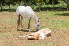 Free Horse Sleeping Stock Photography - 30897542