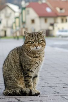 Free Cat On Street Stock Images - 30898094