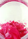 Free Backgroud With Roses Petals Royalty Free Stock Photo - 3099335
