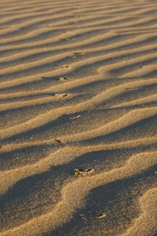 Free Animal Prints In The Sand Stock Image - 3090651