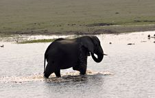 Elephant Bathing Stock Photo