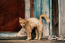 Free The Watchful Cat Stock Photography - 3092142