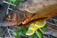Free Grilled Trout Stock Photography - 3092932