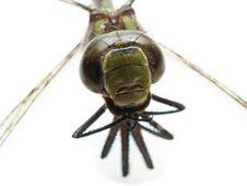 Dragonfly Isolated Eyes Stock Photos