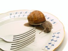 Free Snail And Plate Stock Image - 3093681