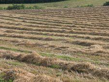 Hay Field Denmark Stock Photo