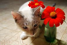 Free Kitten Under Flowers In A Vase Stock Photo - 3095240