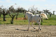 Free Horse Running Stock Photo - 3095340