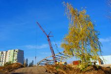 Free A Crane And Birch Stock Photos - 3095443