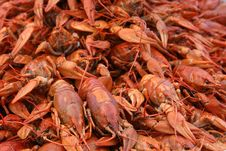 Free Fine Boiled Crayfishes Stock Photography - 3095542