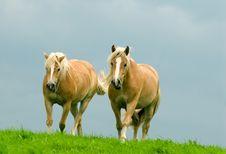 Free Horses Stock Photos - 3095703