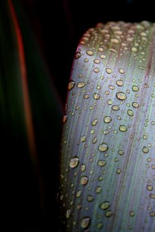 Free Macro Of Water Drops On Leaves Stock Photo - 3096230