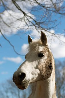 Free White Horse In A Dirt Stock Photography - 3097012