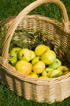 Free Apples In A Basket Royalty Free Stock Photo - 3097365