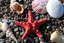 Free Starfish And Cockleshells Stock Photo - 3098980