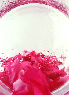 Backgroud With Roses Petals Royalty Free Stock Photo