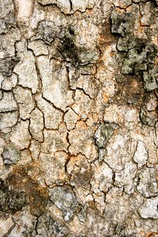 Free Tree Texture Royalty Free Stock Photography - 3099537