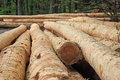Free Logs In Forest Royalty Free Stock Images - 30901619