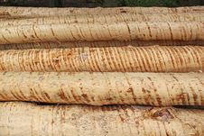 Free Logs In Forest Stock Images - 30901624