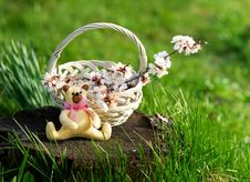 Free Wicker Basket With Flowers And Toy Bear Royalty Free Stock Photo - 30903625