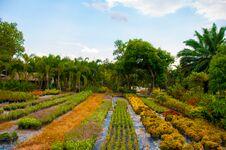 Free Garden Royalty Free Stock Photos - 30911388