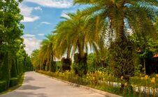 Free Garden Royalty Free Stock Photo - 30911515