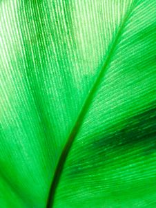 Free Texture Of Green Leaf Royalty Free Stock Photo - 30915335