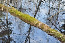 Spring River Landscape. Royalty Free Stock Photos
