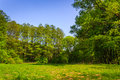 Free Forest Glade In  Shade Of The Trees Stock Photography - 30934272