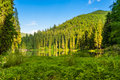 Free Forest Reflection On The Lake On The Background Of Mountains Royalty Free Stock Photo - 30934705